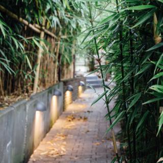 Bambus-Eingang